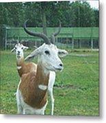 Six Flags Great Adventure - Animal Park - 121250 Metal Print