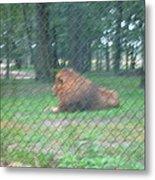 Six Flags Great Adventure - Animal Park - 121252 Metal Print