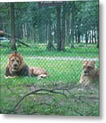 Six Flags Great Adventure - Animal Park - 121253 Metal Print