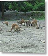 Six Flags Great Adventure - Animal Park - 121270 Metal Print