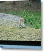 Six Flags Great Adventure - Animal Park - 121272 Metal Print by DC Photographer