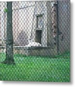 Six Flags Great Adventure - Animal Park - 121275 Metal Print