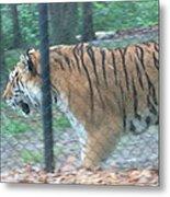 Six Flags Great Adventure - Animal Park - 121278 Metal Print