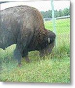 Six Flags Great Adventure - Animal Park - 121280 Metal Print