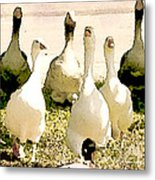 Six Geese And A Duck Metal Print by Artist and Photographer Laura Wrede