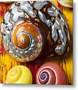 Six Snails Shells Metal Print