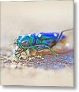 Six-spotted Tiger Beetle - Cicindela Sexguttata Metal Print