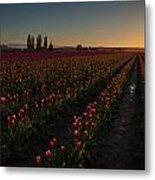 Skagit Dusk Tulip Fields Metal Print