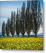 Skagit Trees Metal Print