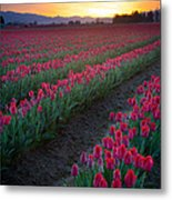 Skagit Valley Blazing Sunrise Metal Print