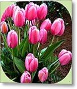 Skagit Valley Tulips 9 Metal Print