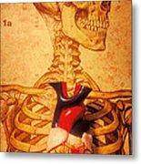 Skeleton And Heart Model Metal Print by Garry Gay