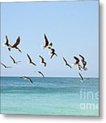 Skimmers And Swimmers Metal Print by Carol Groenen