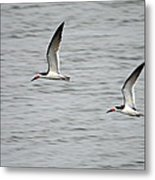 Skimmers On The Prowl Metal Print