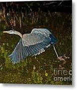 Skimming Great Heron Metal Print