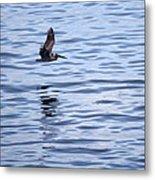 Skimming The Water Metal Print
