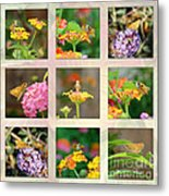 Skipper Butterfly Collage Metal Print