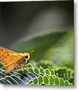Skipper Butterfly On Mimosa Leaf Metal Print