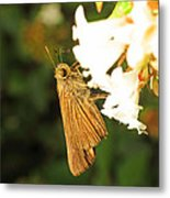 Skipper Butterfly Two Metal Print by Walter Klockers