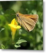 European Skipper On Bird's-foot Trefoil Metal Print