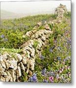 Skomer Wildflowers Metal Print