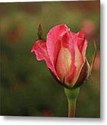 Skc 0422 Blossoming Bud Metal Print