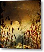 Autumn Lights Sky Colors  Metal Print