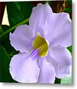 Sky Flower Or Clock Vine Metal Print