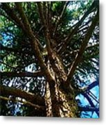 Skyward Spruce Metal Print