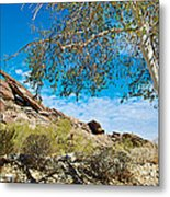 Slanted Rocks And Sycamore Tree  In Andreas Canyon In Indian Canyons-ca Metal Print