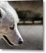 Sled Dog Metal Print by Bob Orsillo