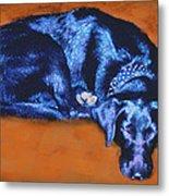 Sleeping Blue Dog Labrador Retriever Metal Print