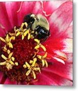 Sleeping Bumble Bee Metal Print