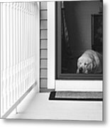 Sleeping Dog Metal Print by Diane Diederich