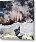 Sleeping Hippo Metal Print
