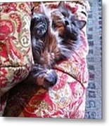 Sleeping In Today Metal Print by Katie Cupcakes