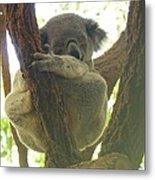 Sleeping Koala In Tree Metal Print