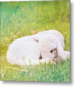 Sleeping Lamb Green Hue Metal Print