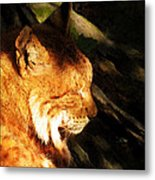 Sleeping Lynx  Metal Print