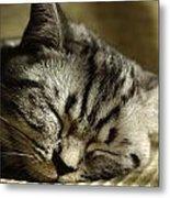 Sleeping Pet Metal Print