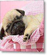 Sleeping Pug In Pink Basket Metal Print by Greg Cuddiford