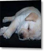 Sleeping Puppy Metal Print