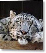 Sleeping Snow Leopard Metal Print