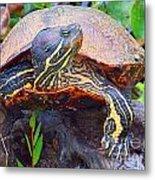 Sleeping Turtle Metal Print by Annette Allman