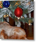 Sleeping Under The Tree II Metal Print