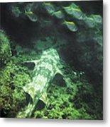 Sleeping Wobbegong And School Of Fish Metal Print