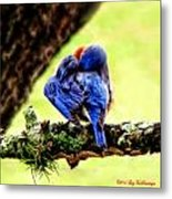 Sleepy Bluebird Metal Print