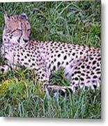 Sleepy Cheetah Metal Print