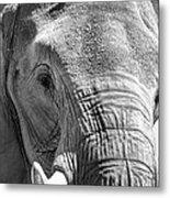 Sleepy Elephant Lady Black And White Metal Print