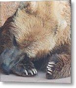 Sleepy Grizzly Bear Metal Print